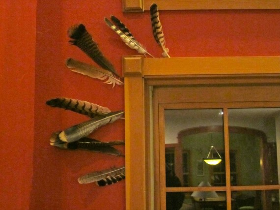 Feathers in the window